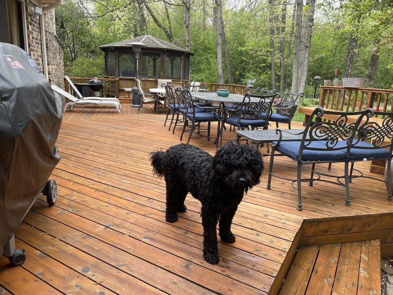a cedar deck in Lincolnshire IL that was restored. lots of furniture and a black poodle