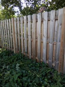 Ruff cut, pressure treated Pine, shadow box fence aged 3 years before Stripping and Brightening EFC-38 Citralic