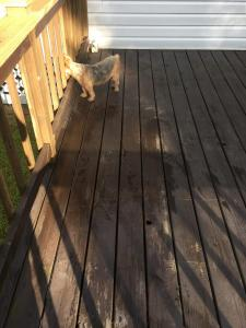Yellow Pine Deck before using HD-80 & Citralic